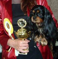 World Champion 2003 Orinoco Or Noir in Germany